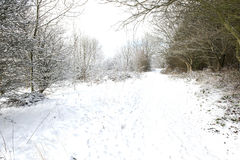 Pathway through a snowy woodland Royalty Free Stock Image