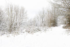 Pathway through a snowy woodland Royalty Free Stock Photography