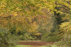 An autumn pathway on Southampton Common royalty free stock image