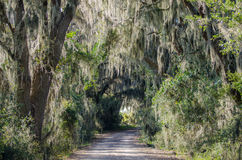 Pathway through Spanish Moss, Savannah National Wildlife Refuge. A drive through spanish moss laden trees on the Laurel Hill Wildlife Drive in the Savannah Royalty Free Stock Images