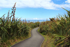 Pathway through spiny spaniards in Greymouth, New Zealand. Pathway through spiny spaniards in Pancake rock, Greymouth, New Zealand Royalty Free Stock Image