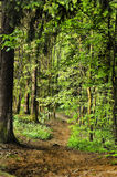 Pathway in spring forest Royalty Free Stock Photos