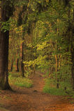 Pathway in spring forest Stock Photography
