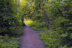 Pathway in spring forest Royalty Free Stock Image