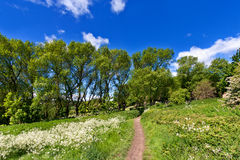 Pathway in spring park Royalty Free Stock Photo