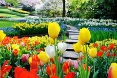 Pathway in spring park Royalty Free Stock Photography