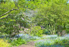 Pathway in a springtime gardens with wild flowers Stock Images