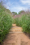 Pathway stairs with tall grass. On sides royalty free stock photography