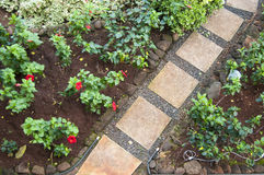 Pathway Stones in a Garden Royalty Free Stock Images