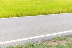 Pathway straight through rice paddy in field farm. Stock Photo
