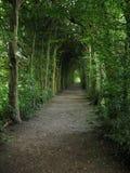 ' the pathway ' straszna Zdjęcie Royalty Free