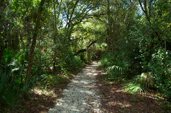 Pathway through subtropical forest Stock Image