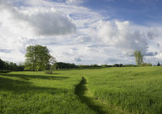Pathway Through a Summer Hayfield Royalty Free Stock Photo
