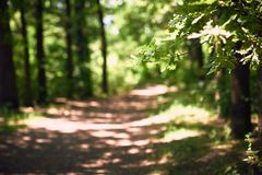 Pathway in summer oak forest, selective focus Stock Images