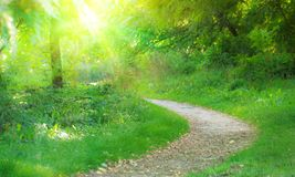Pathway in summer park Royalty Free Stock Photo
