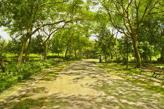 Pathway with sunlight Royalty Free Stock Photos