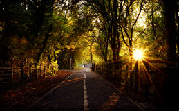 Pathway and Sunlight Stock Image