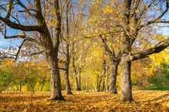 Sunny autumn in the park. Pathway in the sunny autumn park Stock Photos