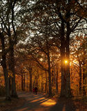 Pathway at sunset in autumn Stock Images