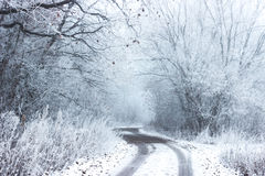 Pathway Surround Forest Covered in Snow Stock Image