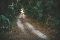 Pathway Surrounded by Green Palm Plants at Daytime Stock Photo