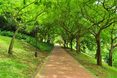A pathway surrounded by lush greenery. A pathway surounded by lush greenery at Fort Canning Park, Singapore Stock Images