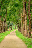 Pathway With Tall Tree Royalty Free Stock Photos