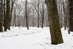 Pathway Throush Snow Covered Park. Royalty Free Stock Photography