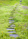 Pathway thru chamomiles and dandelions Stock Photos