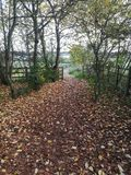 Pathway to Brixworth Country Park in Autumn. Pathway to country park, bare trees and multi coloured leaves carpeting the floor Stock Photo