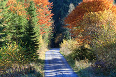 Pathway to heaven - Autumn colors in the Alps. Bright fall colors in the woods in Tirol Austria Stock Images