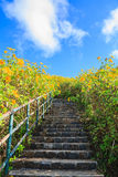 Pathway to hill Royalty Free Stock Photos