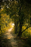 Pathway to Jungle Royalty Free Stock Photo