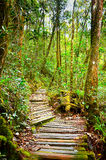 Pathway to nature. Jungle tracking pathway in Kinabalu Park, Sabah, Malaysia Royalty Free Stock Images