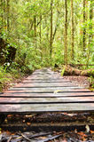 Pathway to nature. Reserved forest in Malaysia Royalty Free Stock Images