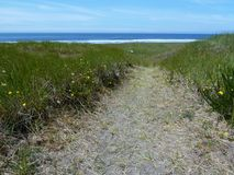 Pathway to the Pacific. Sandy path lined by beach grass and flowers on the way to the Pacific Ocean at Twin Harbors State Park in Westport, Washington Stock Images
