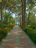 Pathway to sea. Pathway with flowers to sea Stock Photo