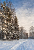 Pathway to winter forest Royalty Free Stock Images