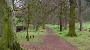 Pathway To Woodland Walk Royalty Free Stock Photography