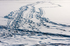 Pathway trail. White frozen water surface of Masuria lake, animal and human trails Stock Image