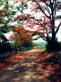 Pathway, trail, trees, plants, sky and mountains Stock Images