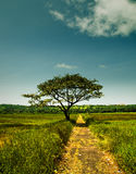 A pathway and tree Royalty Free Stock Photos
