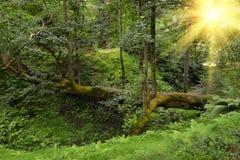 Pathway from tree in sunlight botanical garden Georgia Batumi Stock Images