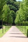 Pathway between the trees Stock Image