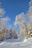 Pathway among trees covered by snow and hoarfrost royalty free stock photo