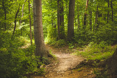 Pathway Between Trees on Forest during Daytime Stock Photography