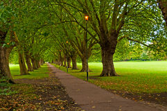 Pathway through trees in park stock photos