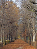 The pathway between trees in park of Vienna Royalty Free Stock Photography