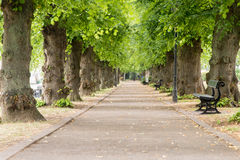 Pathway with trees Stock Image