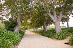 Pathway through Trees. Paved path through trees on warm day Royalty Free Stock Photos